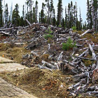 Timber bogmats stockmattor_logo 4
